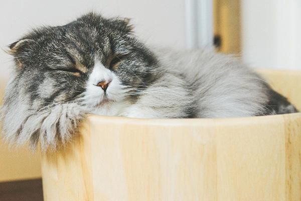 猫と遊んで病気予防!?