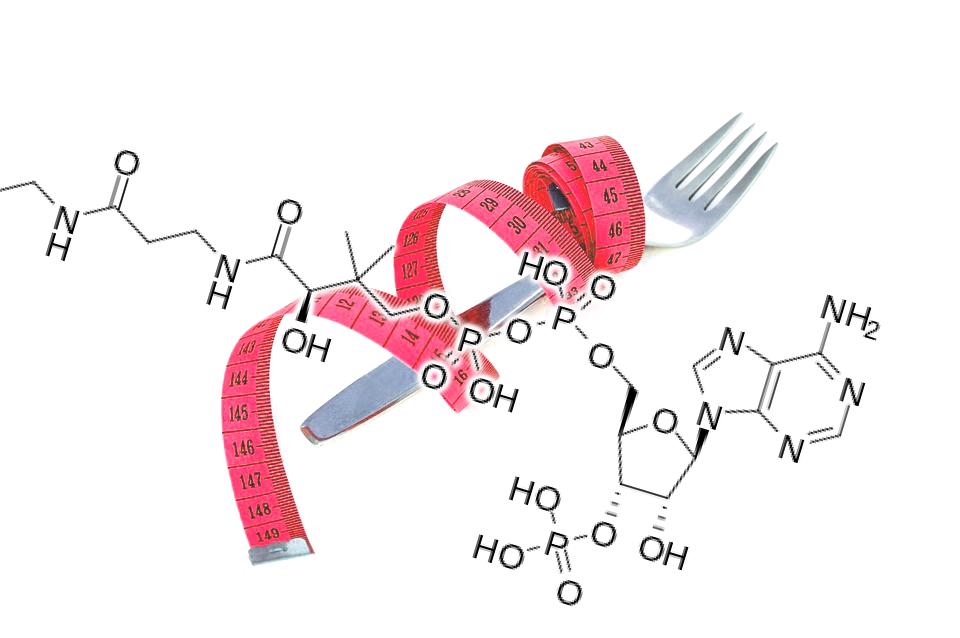 酵素で痩せるワケ